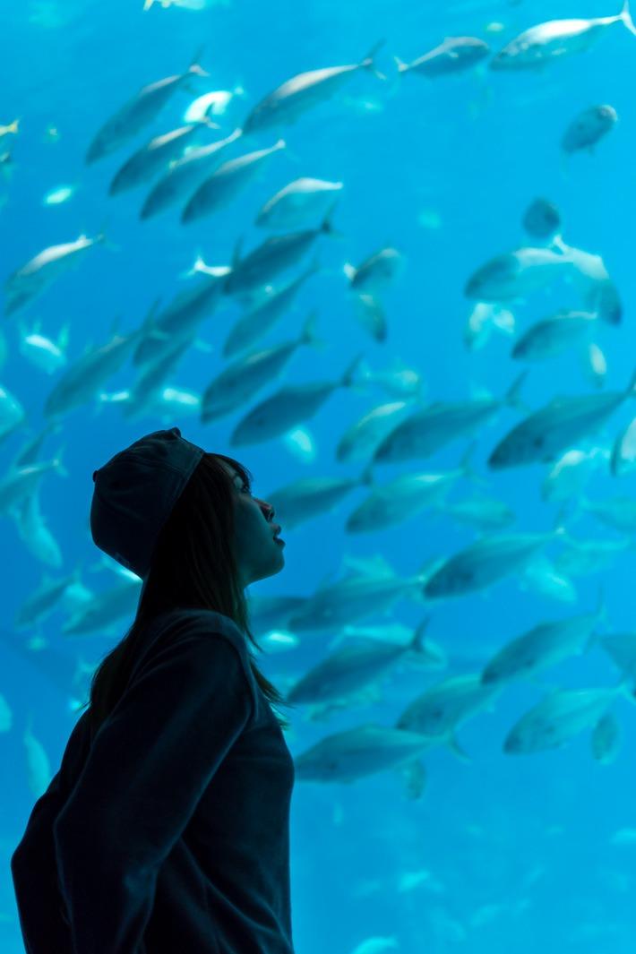 Chimelong-Ocean-Kingdom-Aquarium-Shoal
