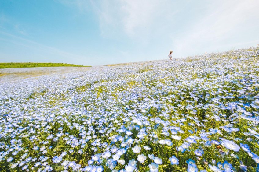 Itachi Seaside Park