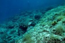 Podmořský svah před ostrovem Veruda
