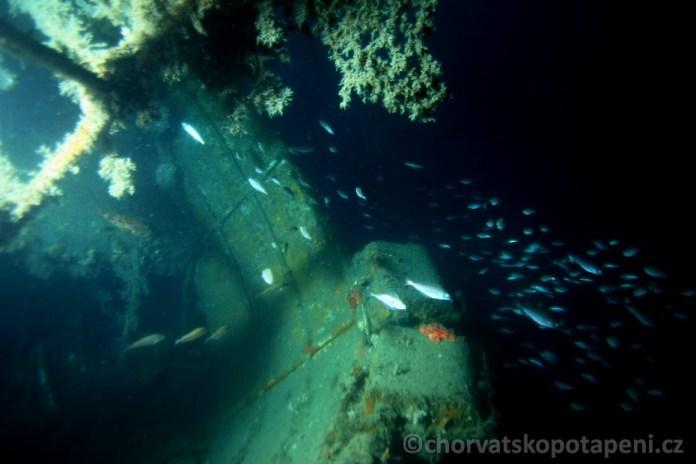Ve vraku Golub, potápění v Chorvatsku