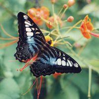 Butterfly Farm @ Teluk Bahang Penang