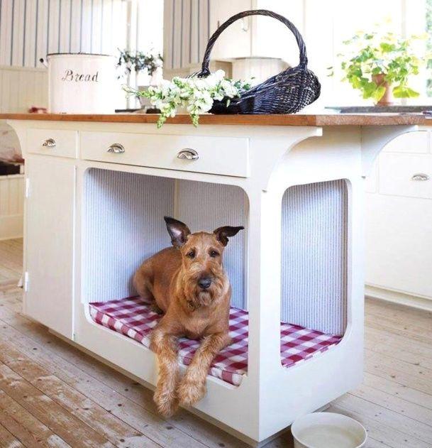 les meilleures niches pour chien