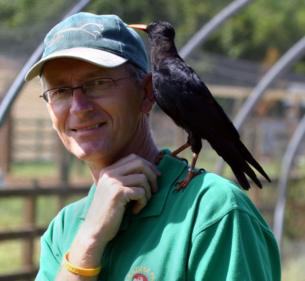 Ray Hales and hand-reared chough Ruby (A Hales)