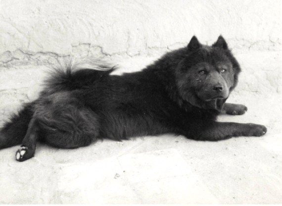 "A beautiful image of one of her blue dogs. This could possibly be ""Bo"", who she described to have such a smooth coat Courtesy Georgia O'Keeffe Museum"