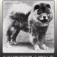 1924 TIME CAPSULE – UK-AMERICAN CH. CHOONAM BRILLIANTINE OF MANCHOOVER – Most expensive dog in the world