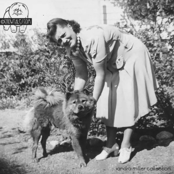 This photo is the same woman as above.I am not certain if the chows are the same dogs.