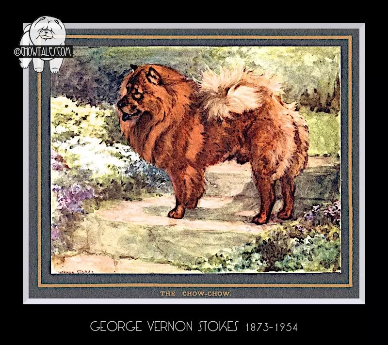 Antique Print of a Chow by G. Vernon Stokes, circa 1910 vernon stokes