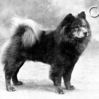 1901 TIME CAPSULE – CH. RED CRAZE