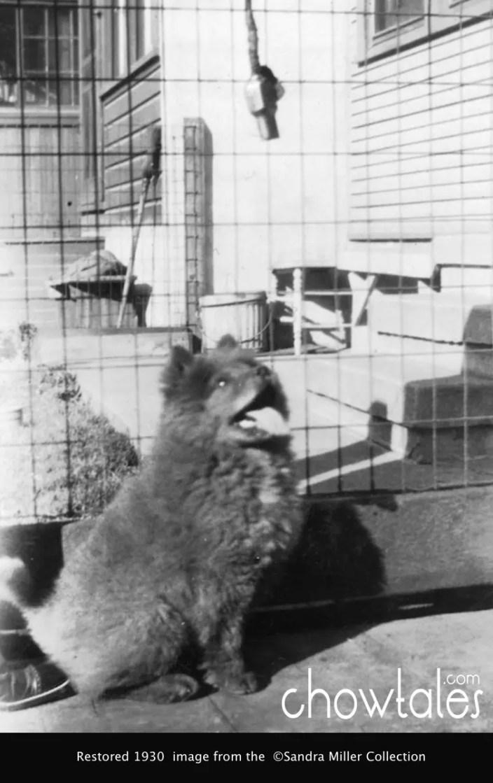 1930 Yen Sen puppy 32015-04-27