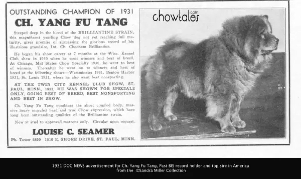 DOG NEWS RARE 1931 Yang fu tang - Version 2
