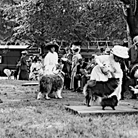 1880-1906 Timeline & AKC Studbooks – Earliest American Chow History