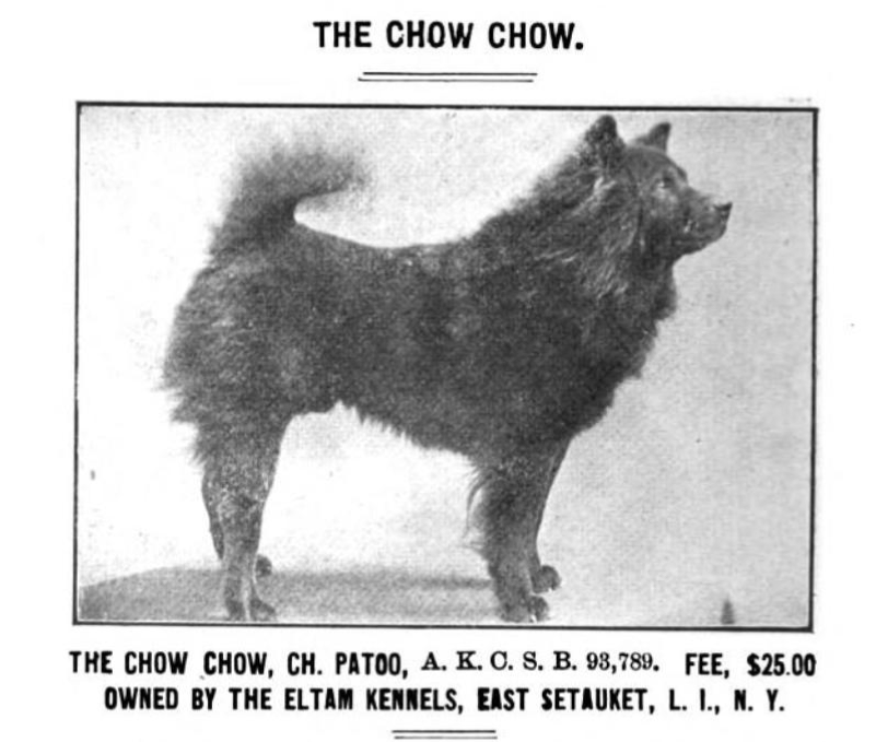 Patoo, the dog the author speaks of in a 1909 ad