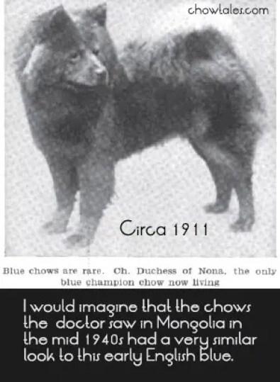 1911_chowchow blue