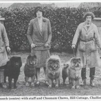 ARTICLE- The Chow Chow Club (England)  Founded 1895