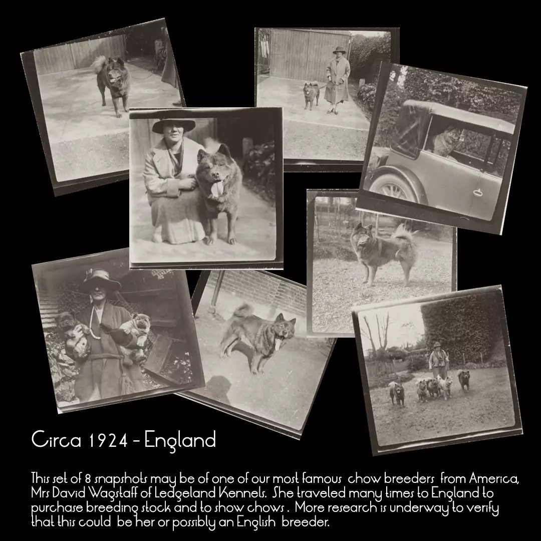 1920s dog breeder england 8 pix collage