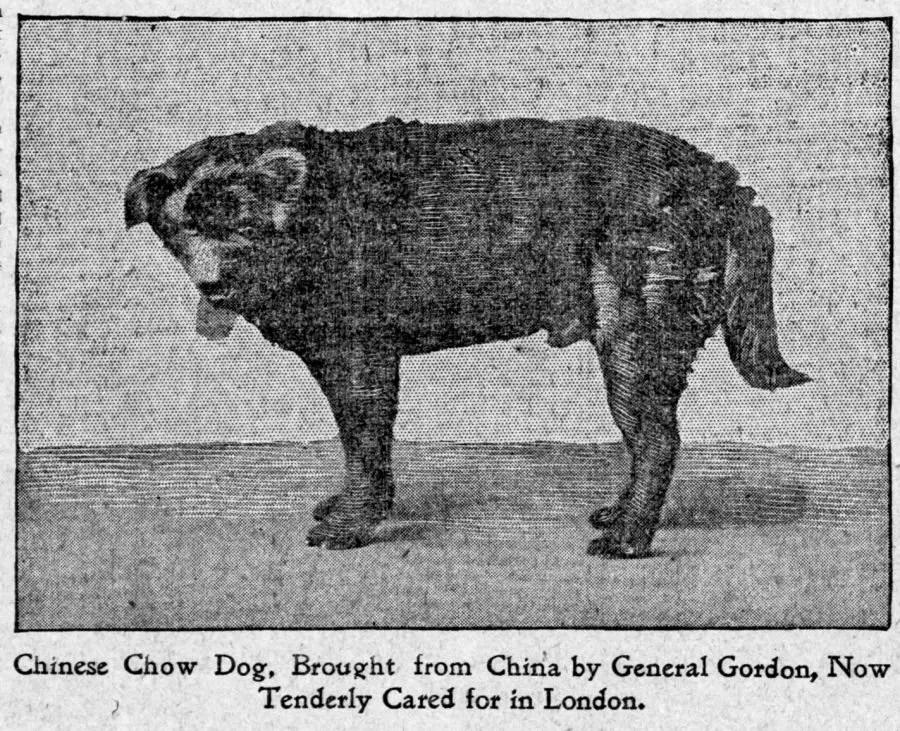 1898-e-gordon-chow-fad