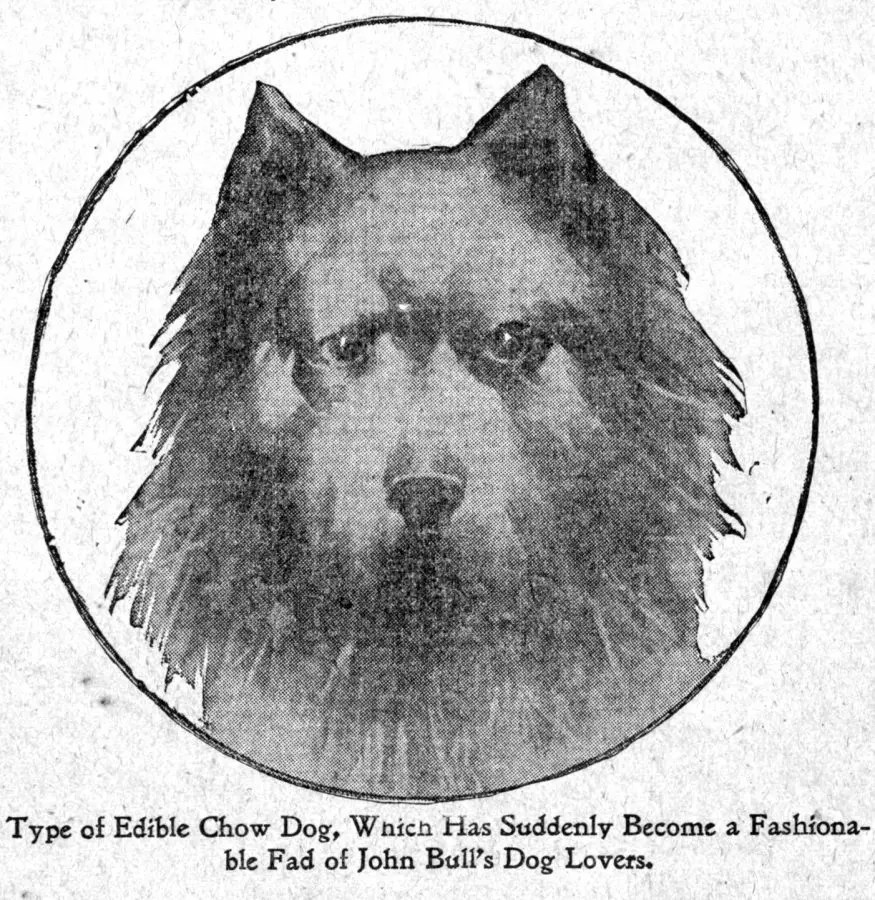 1898-headstudy-gordon-chow-fad