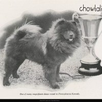 1928 Far East Kennels- rare article in Oil O Matic sponsored magazine