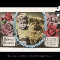 ANTIQUE CHOW POSTCARD COLLECTION – donated to the archives by Mary Counihan
