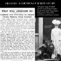 1913 – A Question of Shaded Chows – Blue Joss