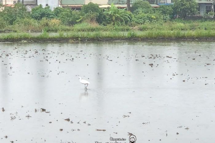 粒粒皆辛苦 農糧署食米體驗活動 東部篇 下雨了更要下田 捉泥鰍,插秧,做米食便當