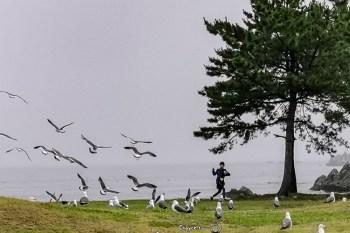 海邊瑜伽太美太滿足 種差海岸(葦毛崎展望台) michiniku潮風trail 青森八戶旅行 蕪島黑尾鷗保育地