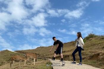 來去馬祖找梅花鹿玩 200隻鹿兒出沒 馬祖大坵島 全年可造訪要包船