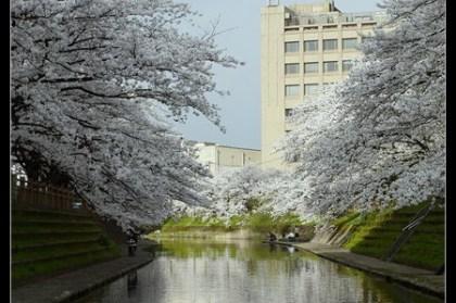 (日本) 富山縣 富山城外松川旁 富山第一酒店 開房間文