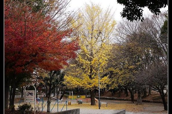 東京 戶山公園、新宿御苑、上野公園之銀杏美翻天!