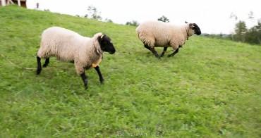 綿羊奔跑,歐風教堂,歐式婚禮?北歐還是北國?北海道深川町聖瑪格利教堂 イルムの丘 聖マーガレット教会