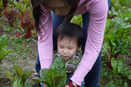20100405-烏來璞石麗緻活動推薦