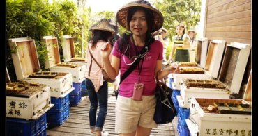 (台灣好好玩) 南投埔里 宏基蜜蜂生態農場(被百萬隻蜜蜂包圍的女王)