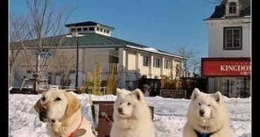 (日本枥木縣) 那須動物王國 租狗逛大街、狗兒拉雪橇、CAT秀讓你大開眼界