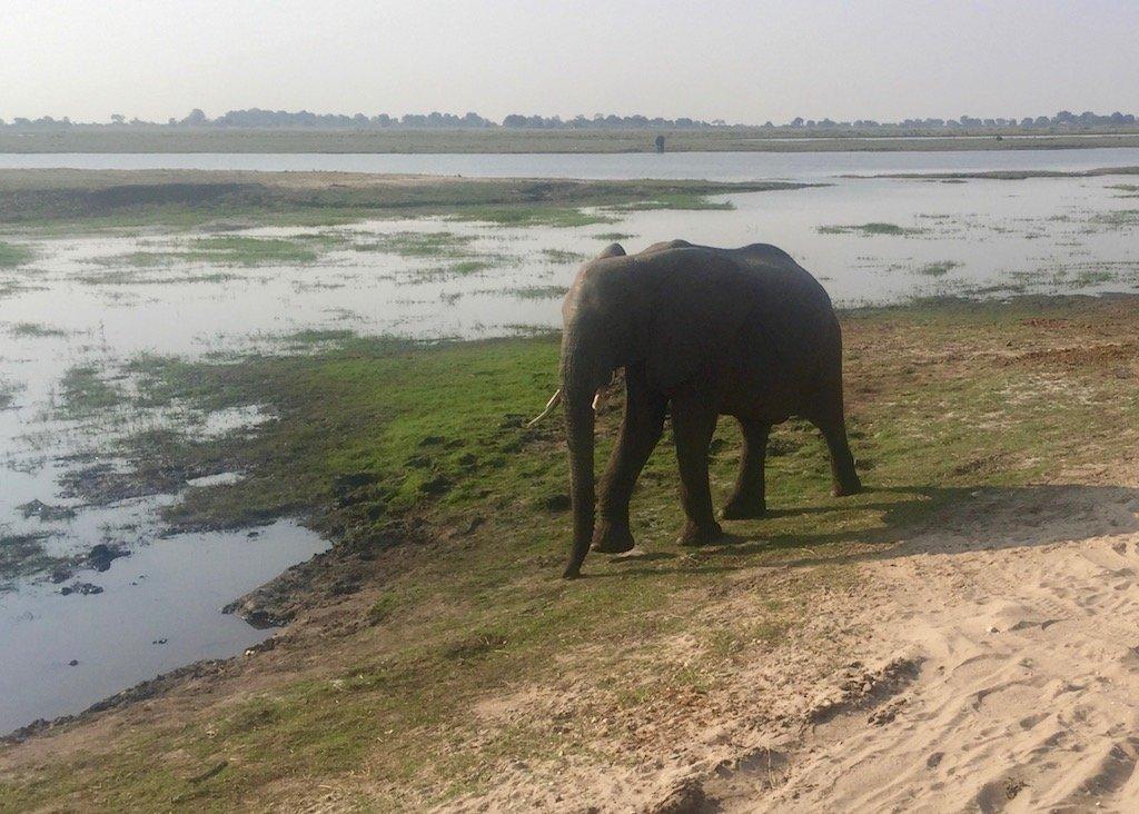 Zambezi, Chobe and Victoria Falls