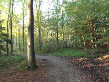 Waldabschnitt ab Westhofen