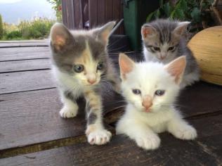 Kittens - Tina Serianni
