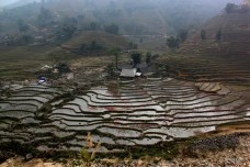 One of the countless paddy fields dotted throughout sapa