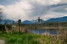Burnaby lake park-11