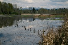Burnaby lake park-12