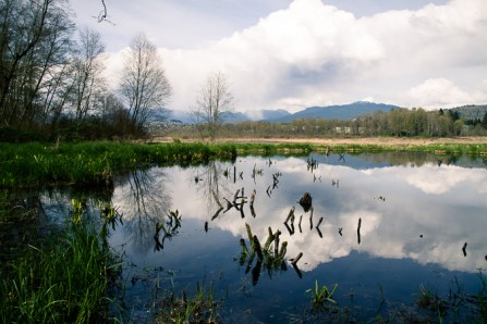 Burnaby lake park-8