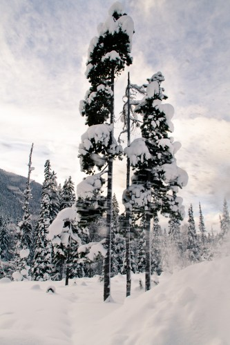 Manning Park at Christmas-3
