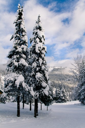 Manning Park at Christmas-36