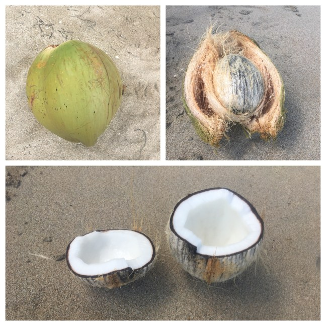 Picture of the stages of cracking into a coconut on the beach