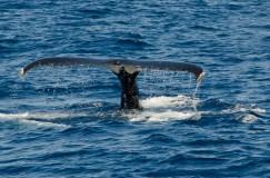 WhaleWatching-146