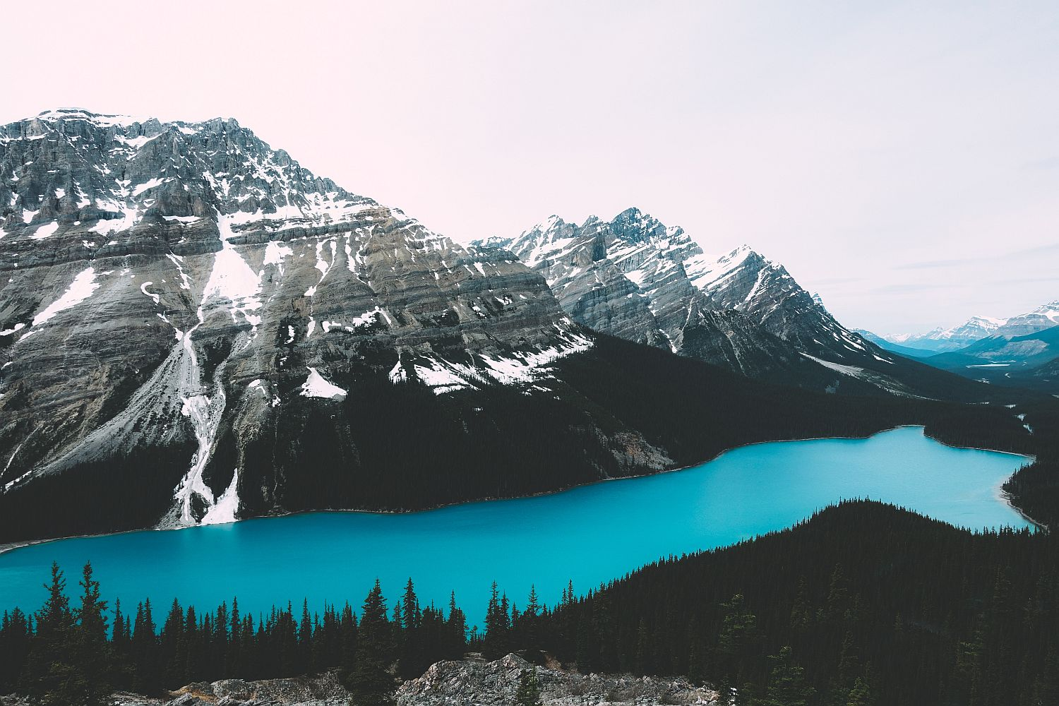 Peyto Laker - Icefields Parkway