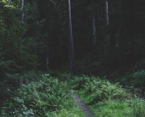 Unterwegs im Wald im Harz