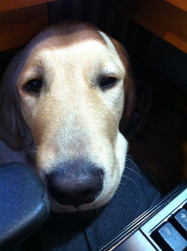 needy dog