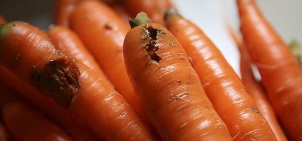rotting carrots