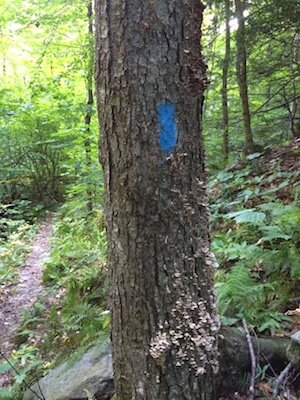 Bolton Pond Trail Marker