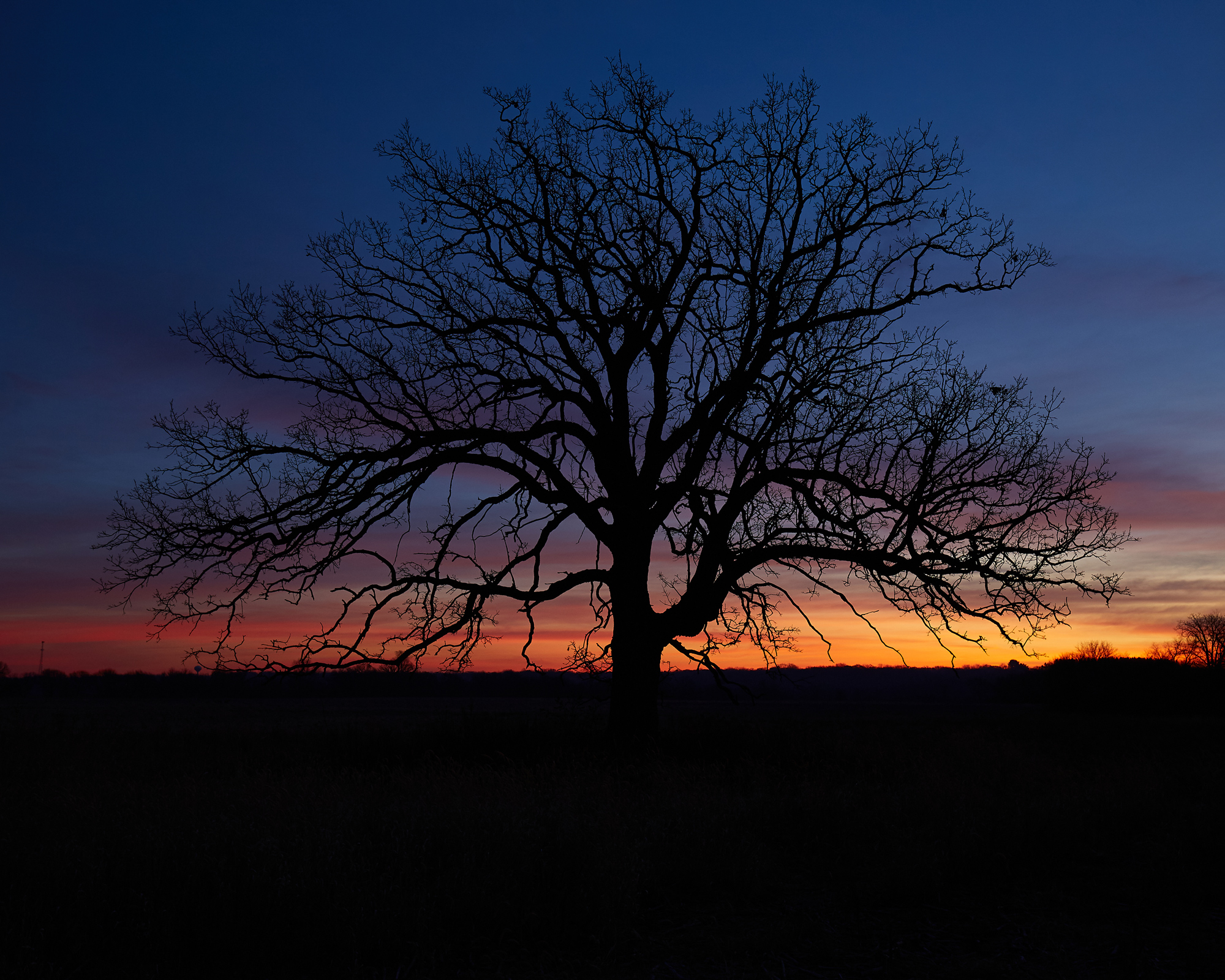 Sunrise Tree, No. 1